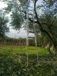 scala dell'ulivo
