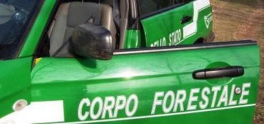 Corpo_forestale