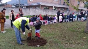 festa alberi fonti 5