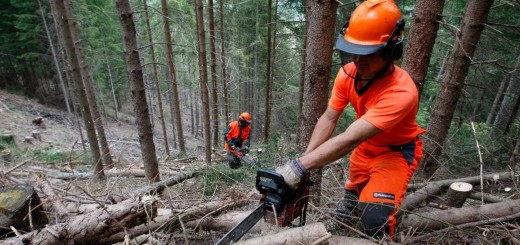 taglio-alberi-ky-1728x800_c