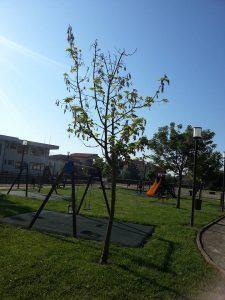 albero_03