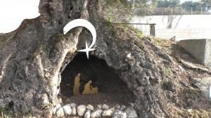 PRESEPE ULIVO MONUMENTALE (1)