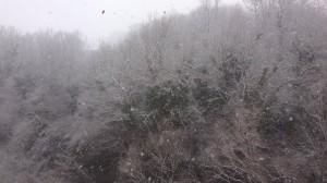 neve polla graziano vocca 2