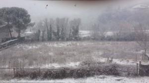 neve polla graziano vocca
