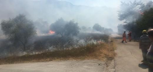grave incendio auletta 700 ulivii in fumo