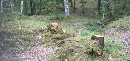 alberi-tagliati-1