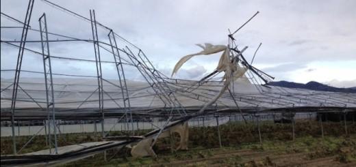danni-maltempo-vento-serra-valdinievole-marzo15-fonte-coldiretti-pistoia