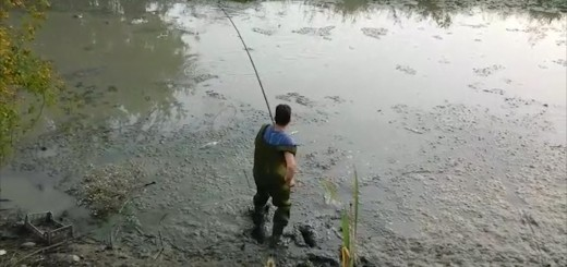 volontari salvataggio pesci tanagro (3)