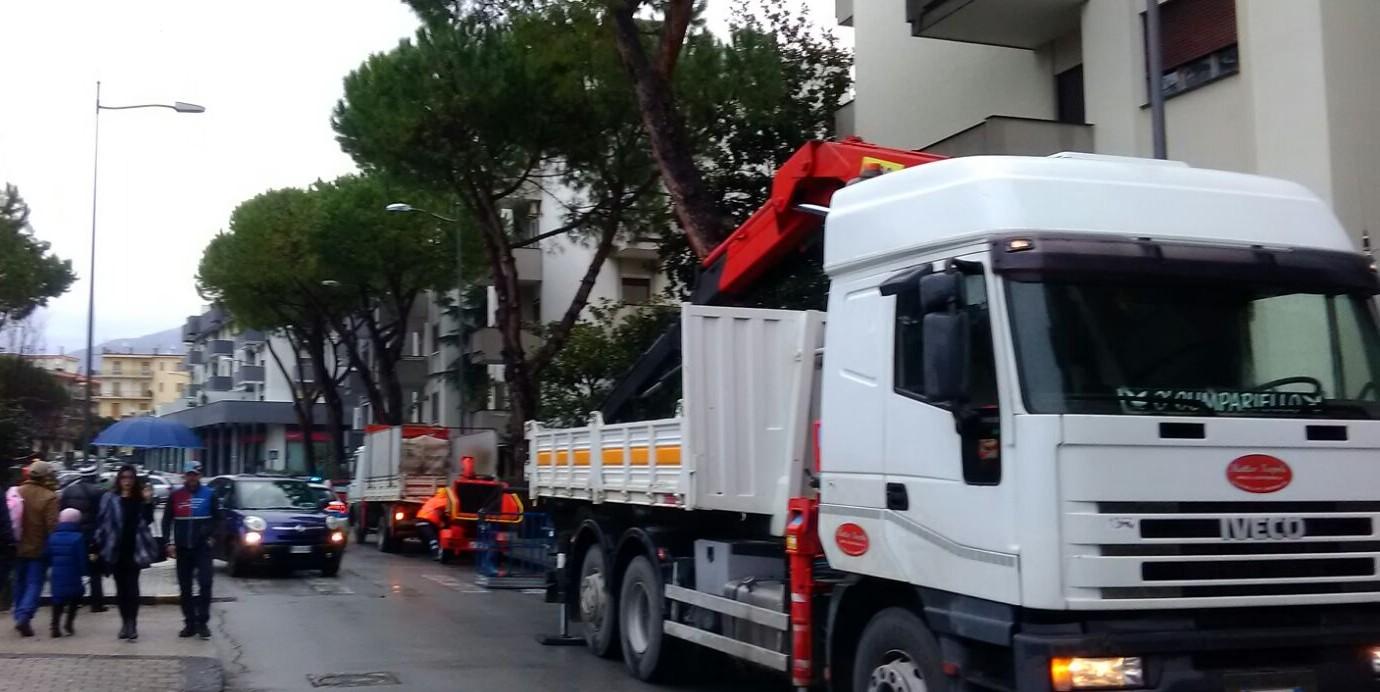 Ufficio Verde Pubblico Salerno : Abbattuti alberi pericolanti al parco arbostella a salerno: a