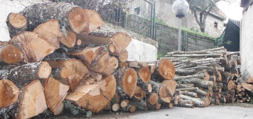 legna padula forestale